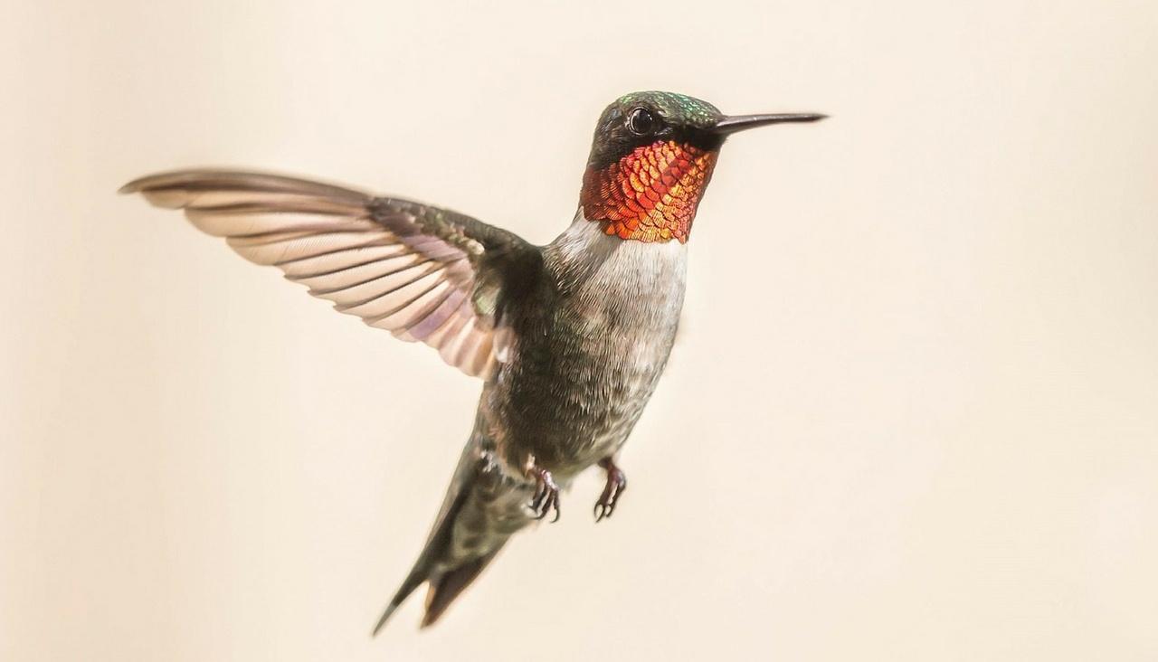 Google Hummingbird y el seo por descubrir